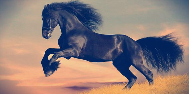гороскоп 2016 для лошади