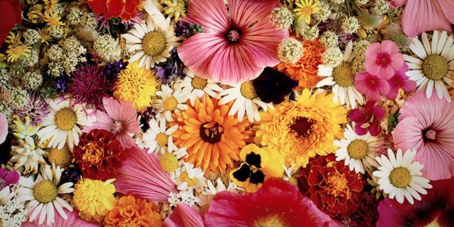 какие цветы подарить женщине