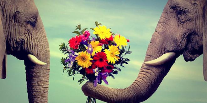 почему нужно дарить цветы