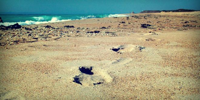 отдых в Анапе 2015 Джемете цены у самого моря частный сектор