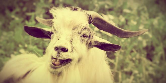 гороскоп 2016 для козы