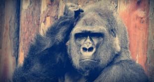 гороскоп 2016 для обезьяны