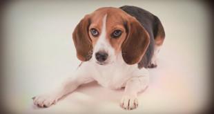 гороскоп 2016 для собаки