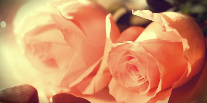 какие розы подарить девушке на 14 февраля