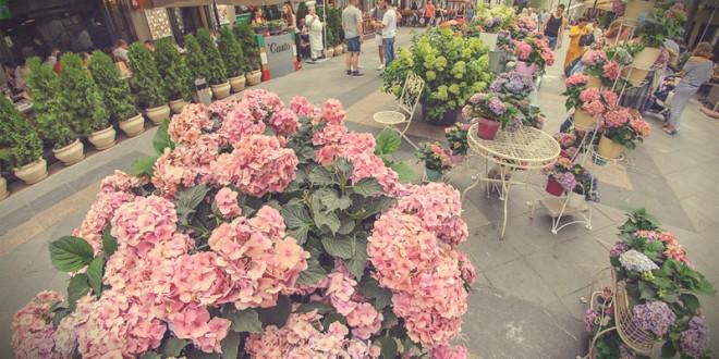 фестиваль московское лето цветочный джем