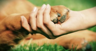 сценарий на день защиты животных
