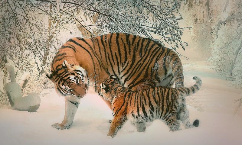 Как поздравить и что пожелать на 2022 год Тигра?