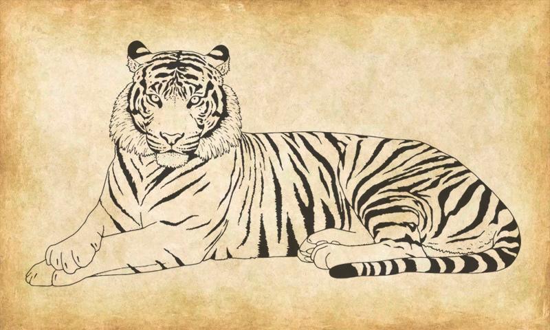 Как нарисовать символ 2022 Нового года – Черного Тигра?